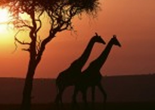 East Africa Under Canvas
