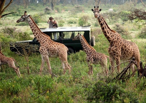 SportPesa deals boosting Kenya's tourism sector