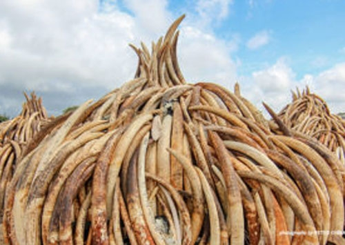 UK aid to crack down on illegal wildlife trade