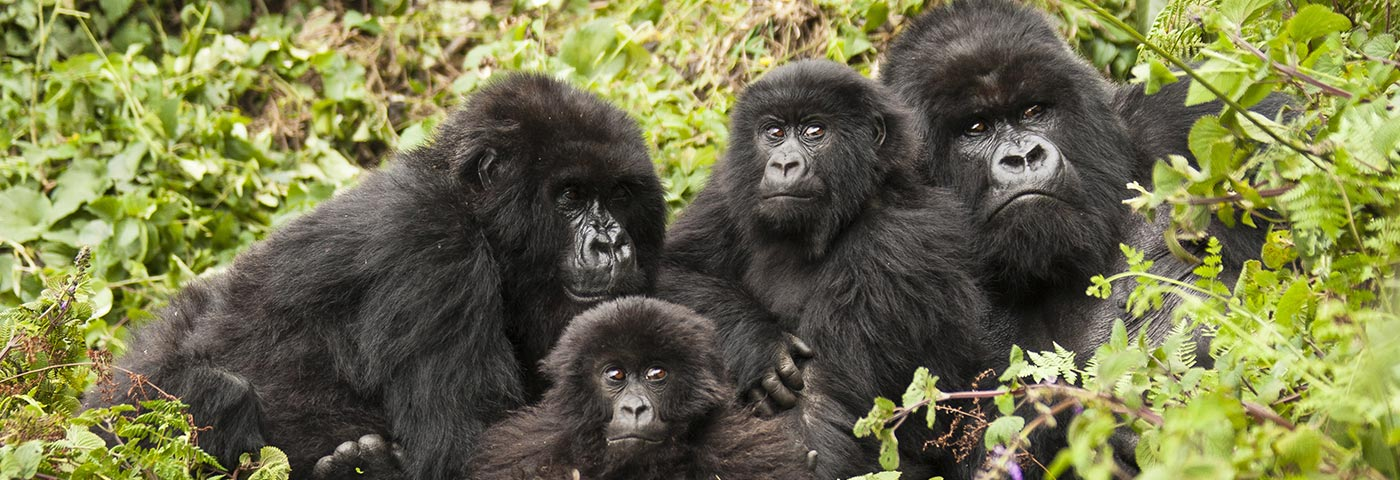 Destinations in Rwanda