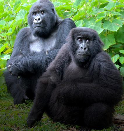 Primate & Gorilla Trekking