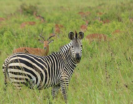 Mkomazi National Reserve